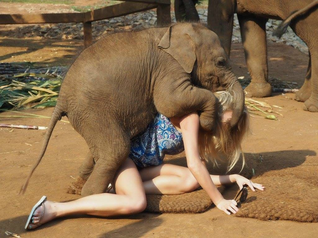 For Girl in elephant fuck sex with